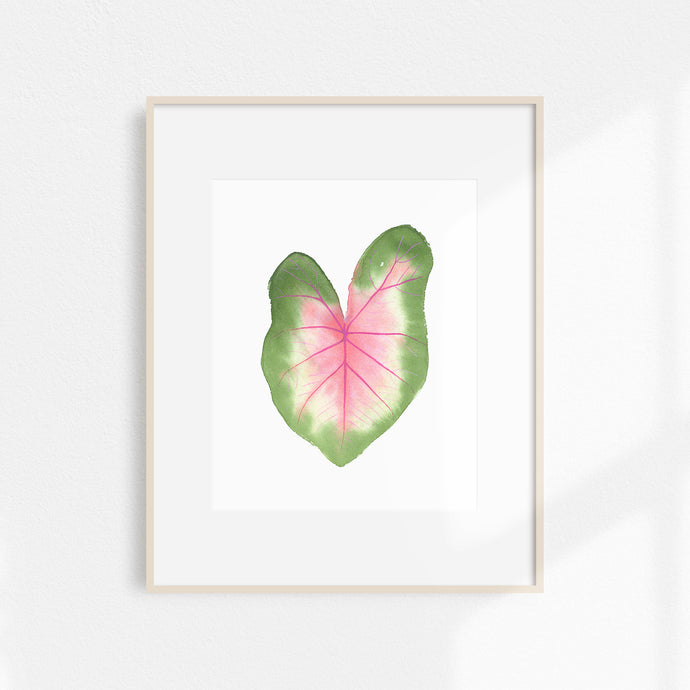 Watercolor Caladium Print