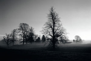 Early Morning Mist and Trees, Wallingford, Oxfordshire
