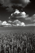 Load image into Gallery viewer, Clouds above a Cornfield, Oxfordshire