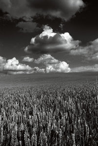 Clouds above a Cornfield, Oxfordshire