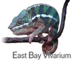 East Bay Vivarium