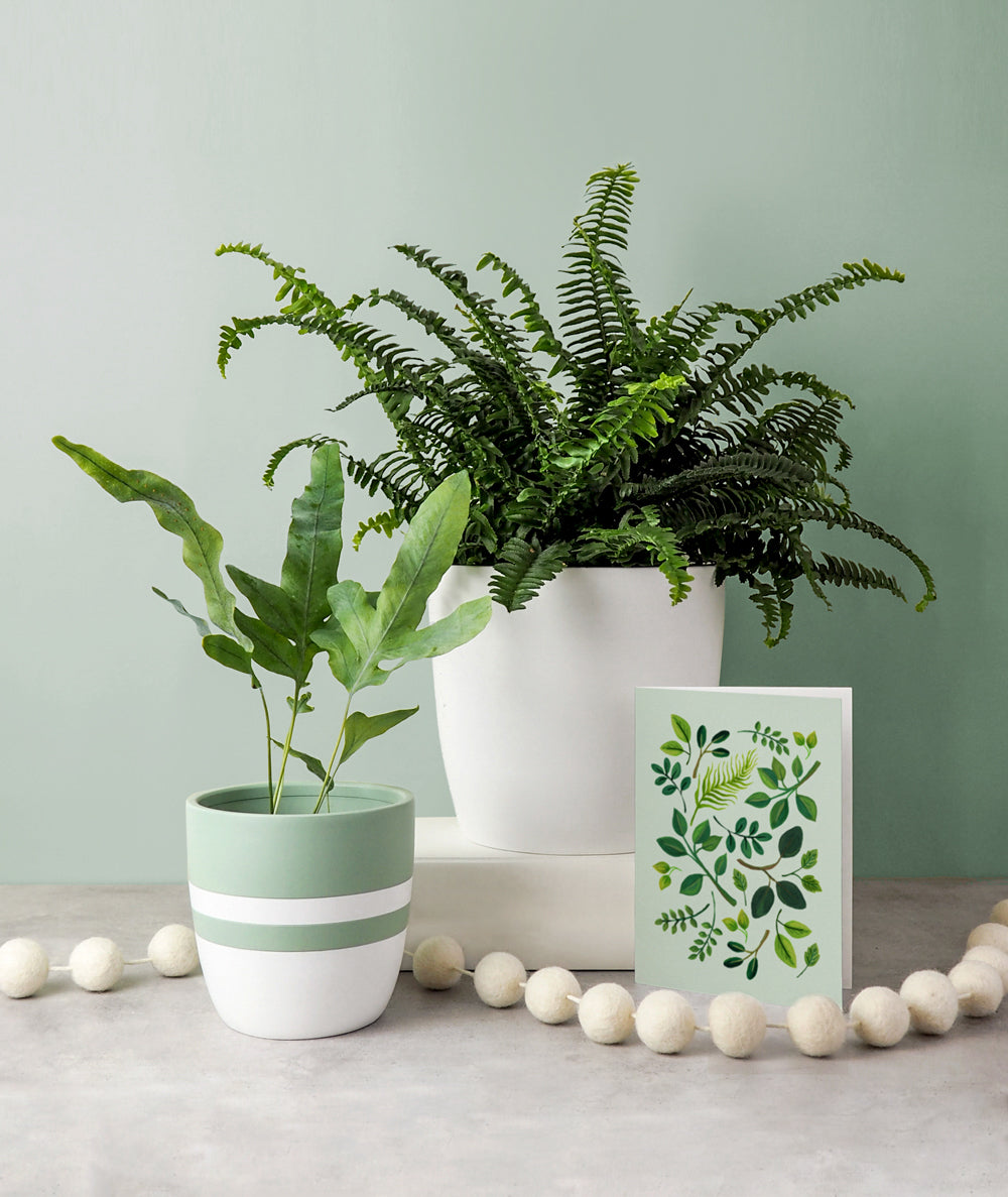Festive Ferns Gift Set