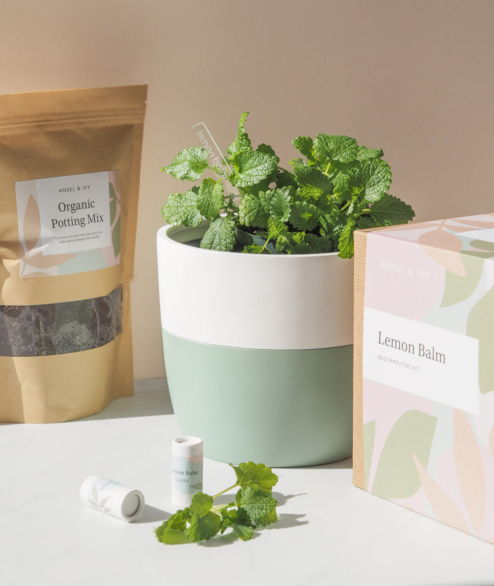 Lemon Balm Grow Kit