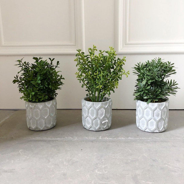 Mini Potted Plants - The Irish Country Home
