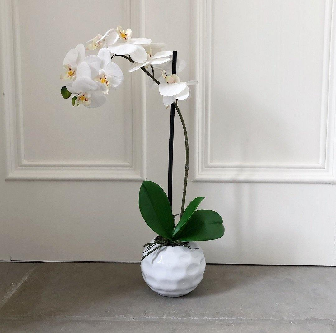 White Orchid in a Dimpled Pot 50cm - The Irish Country Home