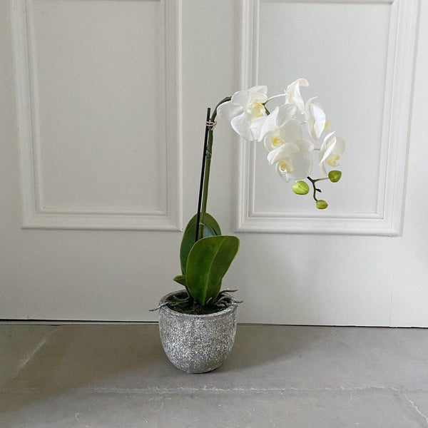 Exquisite Small Potted Orchid