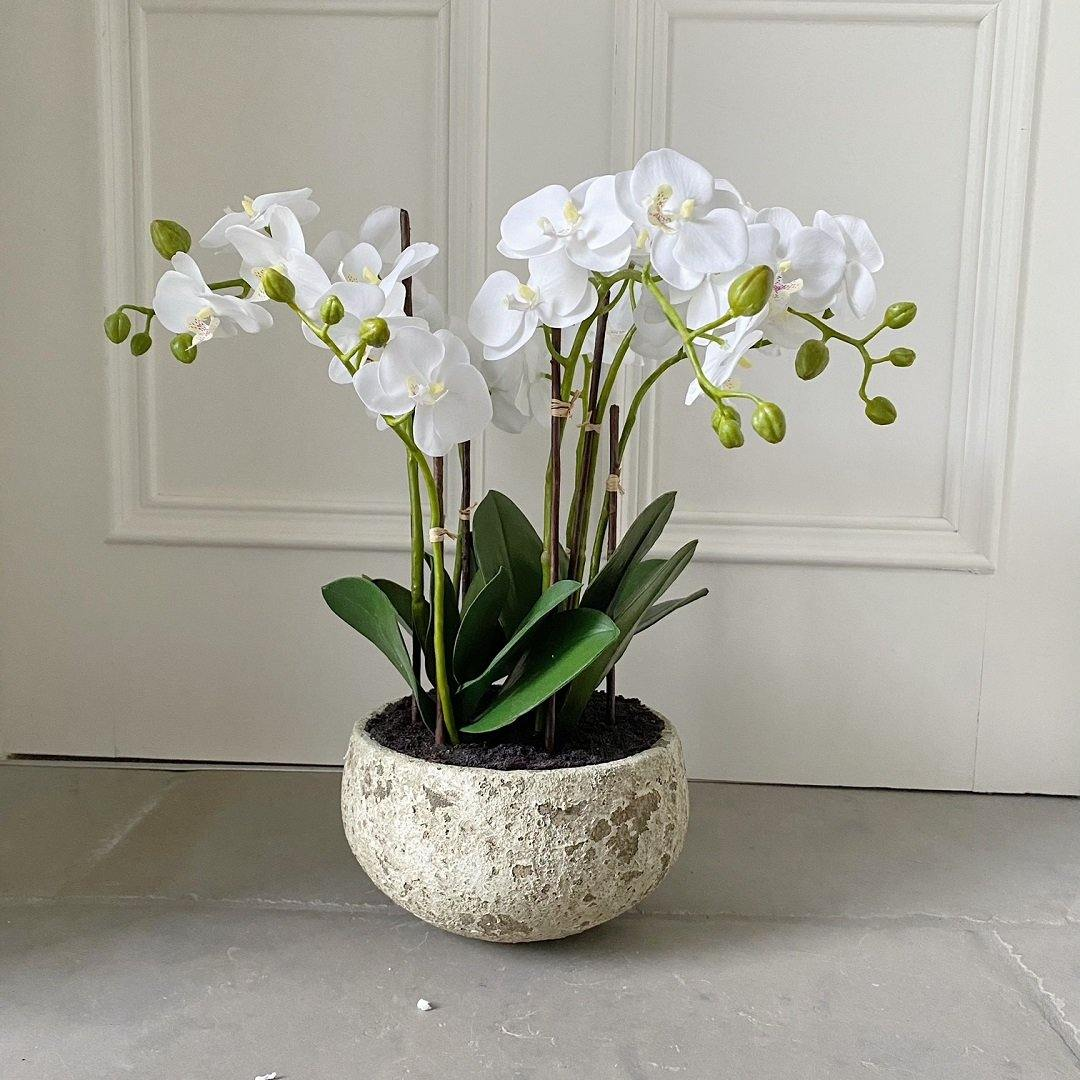 White Orchids in Clay Pot 47cm