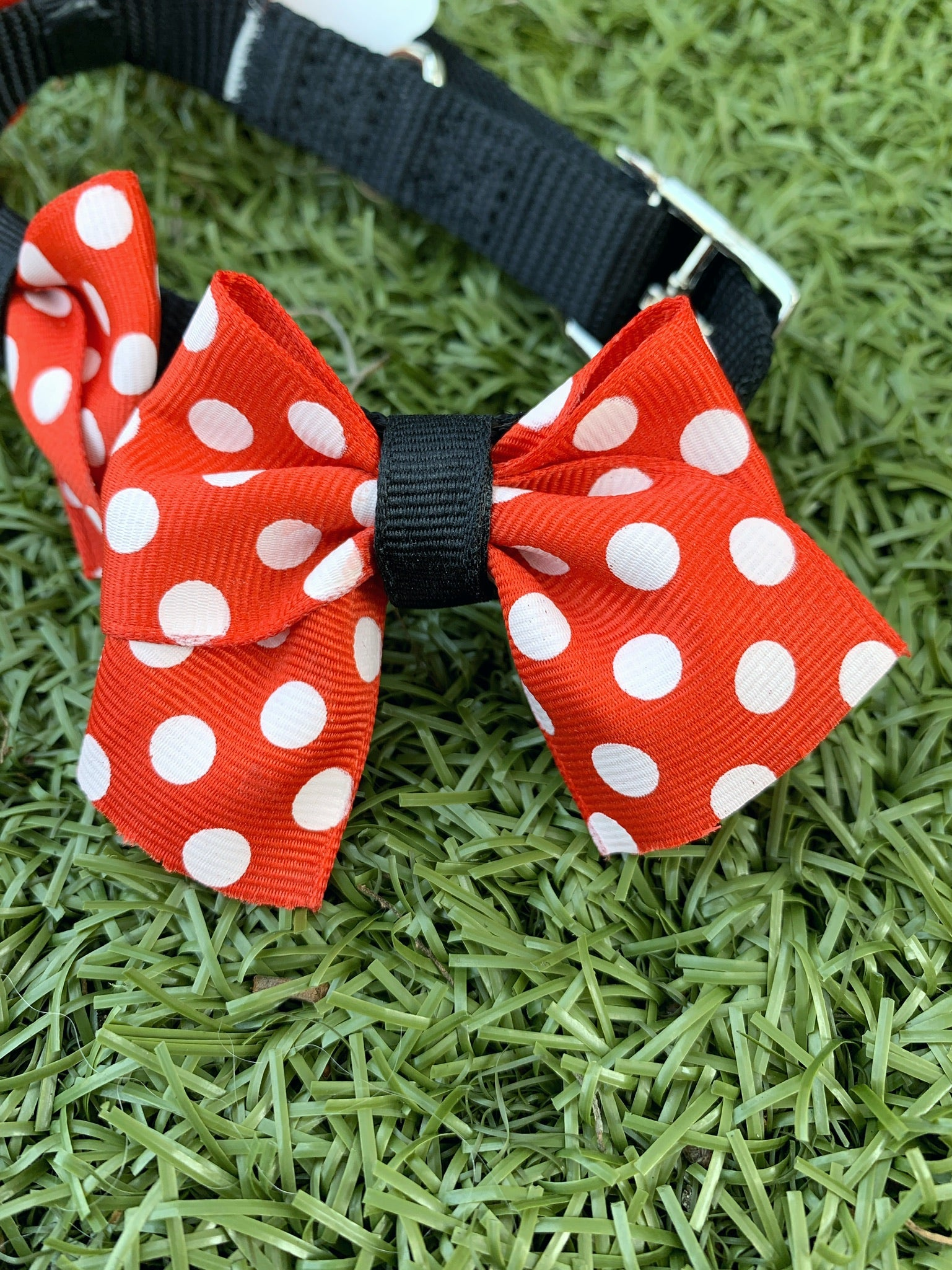 Red Dot Bow Collar