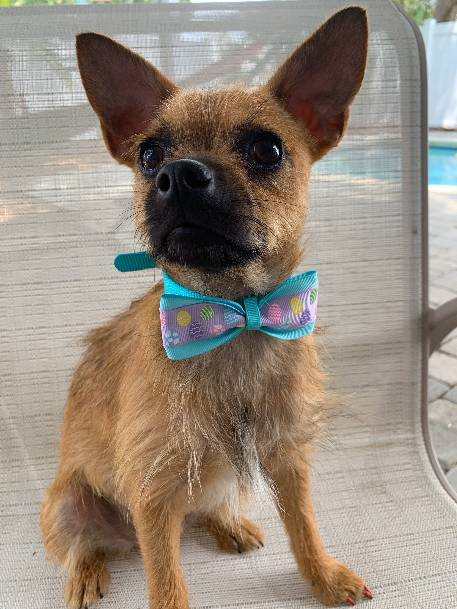 Easter Eggs Bowtie Collar