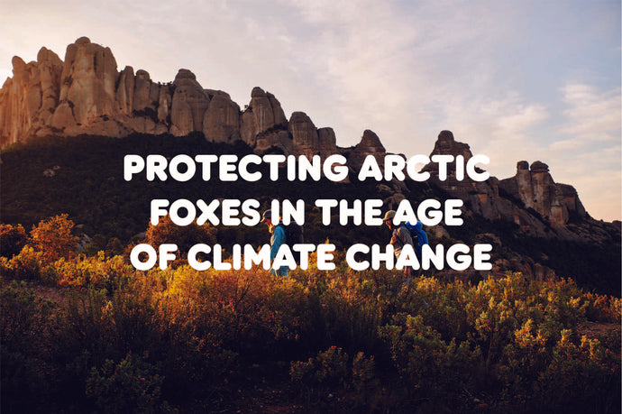 Protecting arctic foxes in the age of climate change