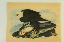 Load image into Gallery viewer, (7) Wildlife prints after J.J. Audubon - lot 1777