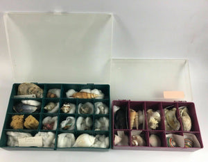 2pc Assorted Seashell Collection Boxes - Lot 4164