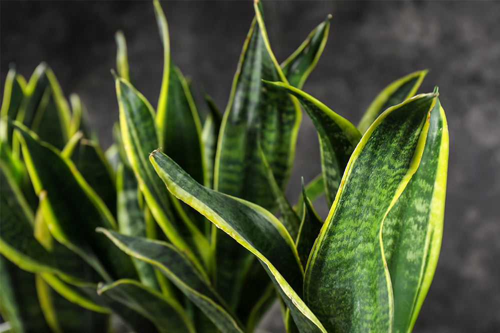 Major Shade: 6 Houseplants For Low Light Areas In Your Home