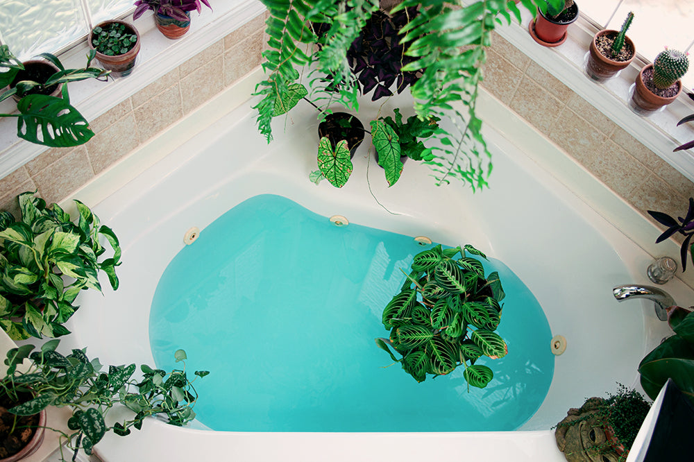 7 Houseplants to Raise the Vibes in Your Bathroom