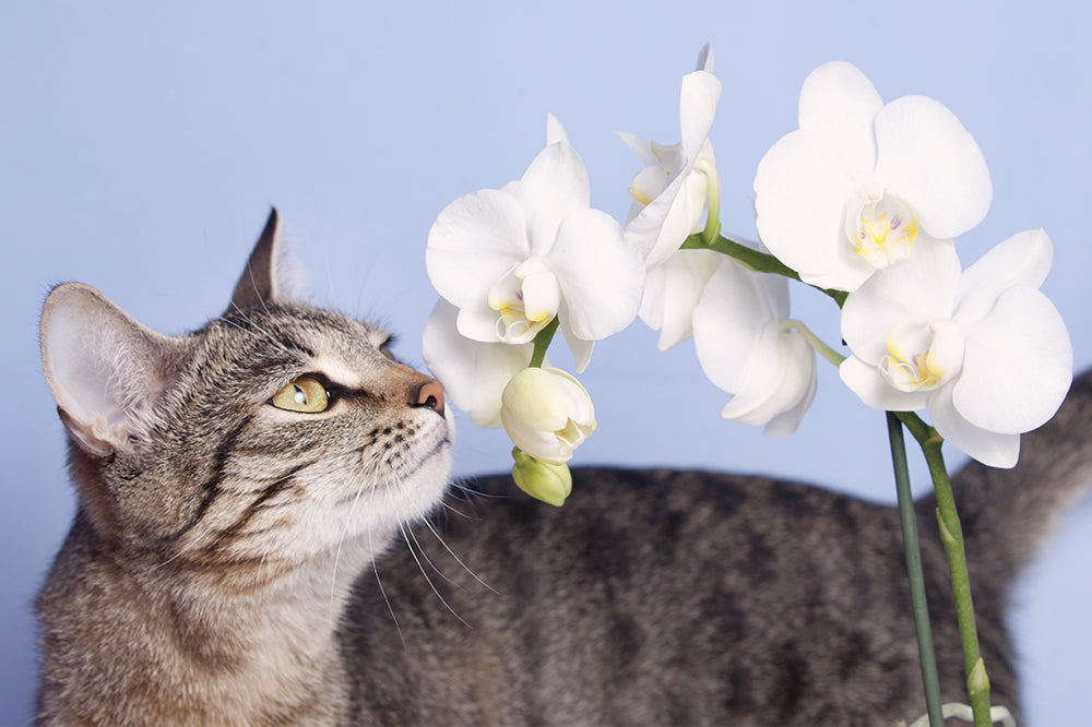 7 Cat-Friendly Houseplants You Should Bring Home
