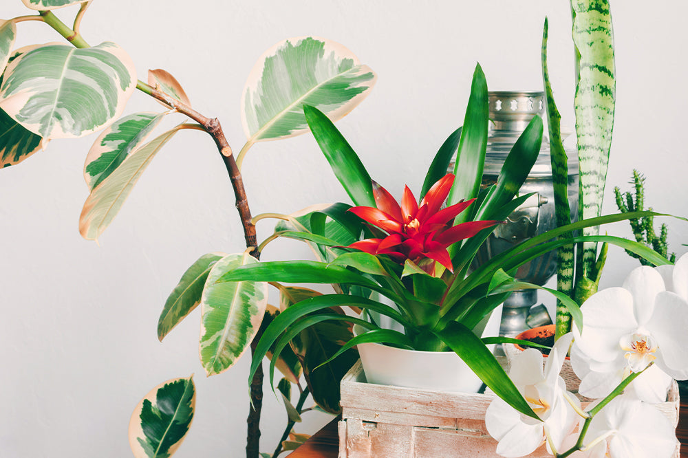 8 Colorful Houseplants to Brighten Up Your Home This Spring!