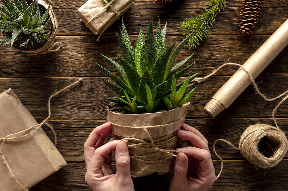 9 Tips for Beautiful Potted Plant Gift Wrap