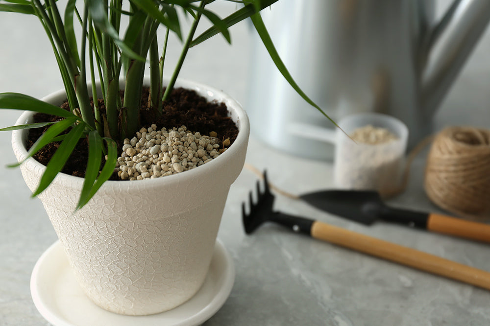Do I Need to Fertilize My Indoor Plants?