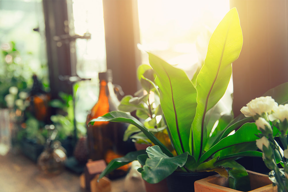 Transition Into Spring With Your Indoor Plant Care Routine