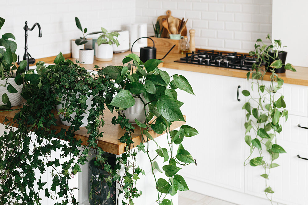 5 Gorgeous Kitchen Plants to Spruce Up Your Space