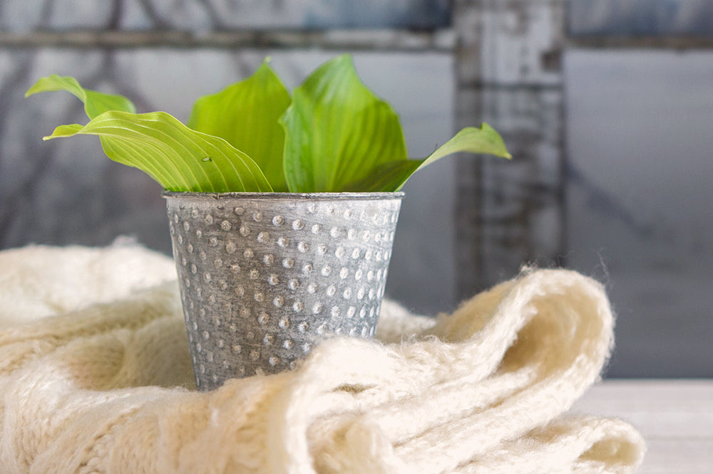 How to Take Care of Houseplants in Winter, Wherever You Live