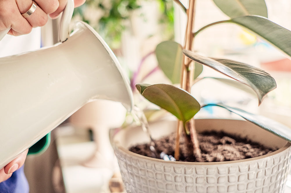 You Have to Stop Overwatering Your Plants