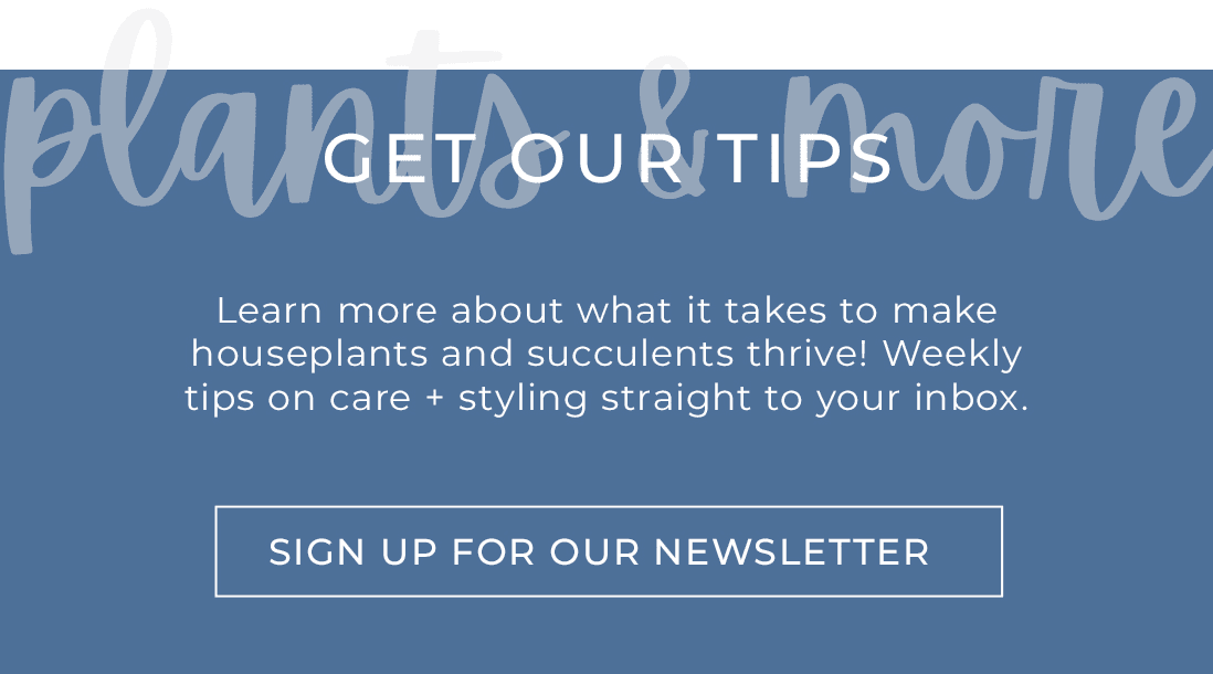 sign up for our newsletter by clicking here
