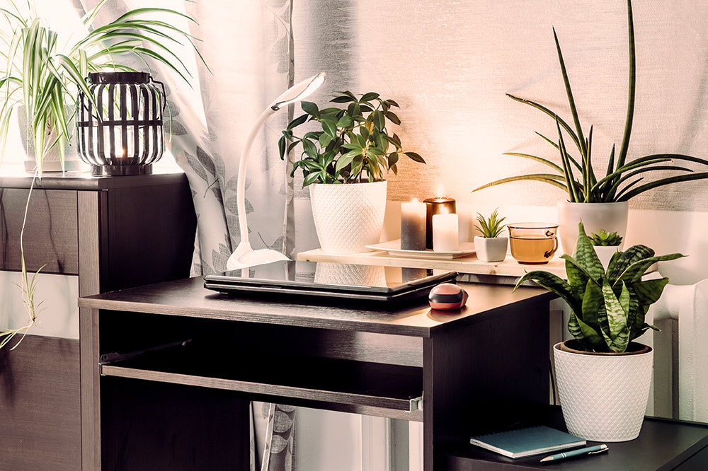 cottagecore aesthetic tip 1: layers of houseplants