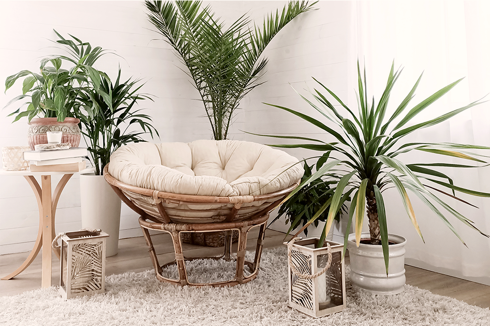 collection of various houseplants assymetrical design