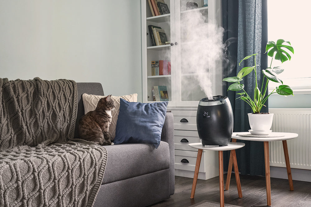 houseplant humidity with humidifiers