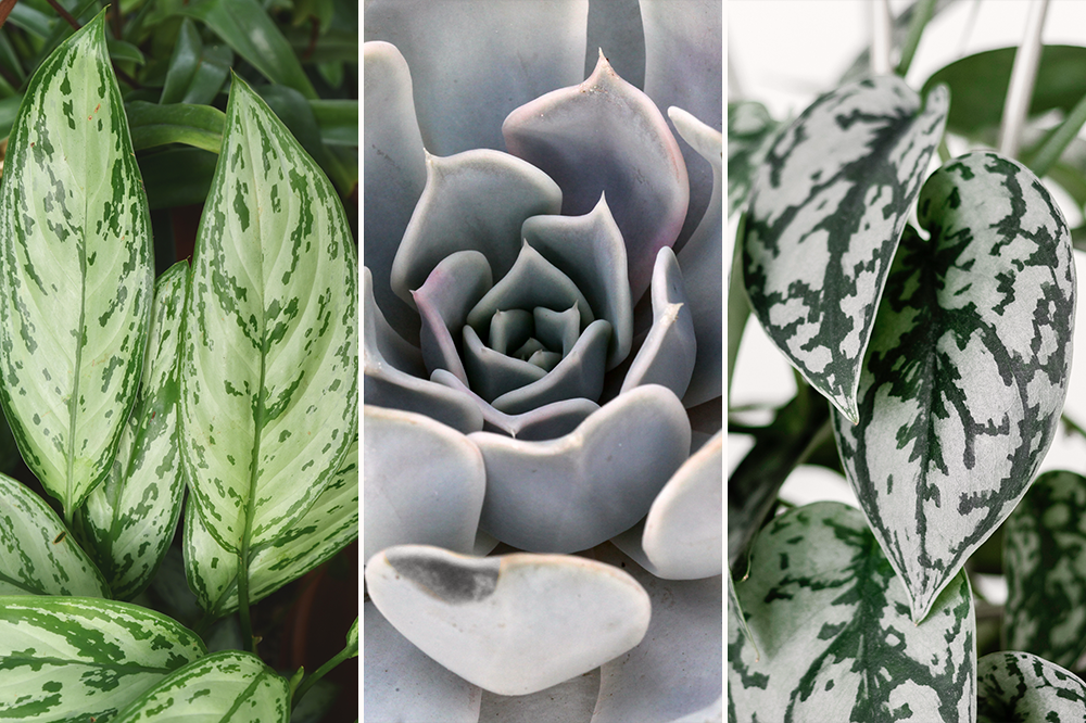 ultimate gray pantone color 2021 plants