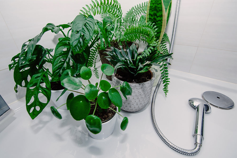 cluster of houseplants in shower