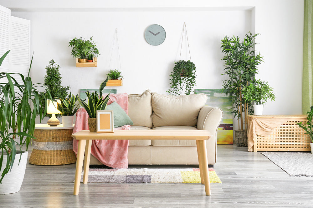 houseplants on floating shelves