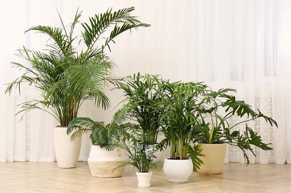 huddle of houseplants palms philodendron