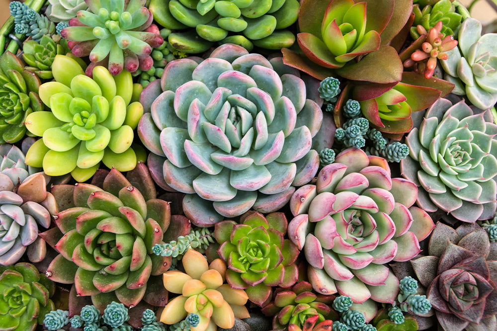 living art project ideas succulent arrangement