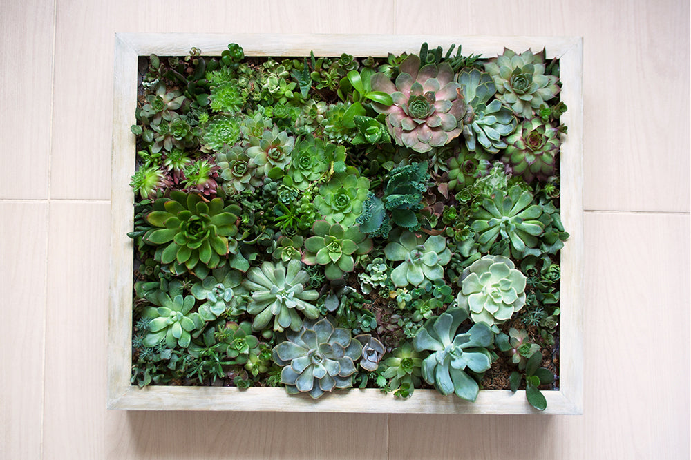 living art project ideas succulent frame