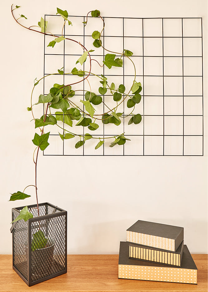 living art project ideas trailing plant trellis
