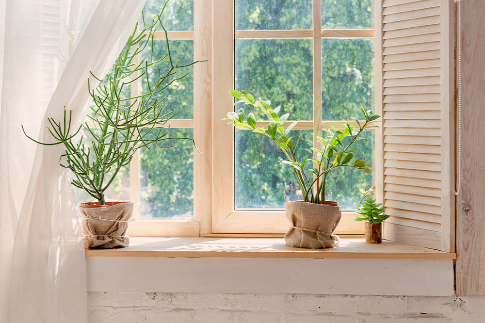 pacific northwest plant care tips
