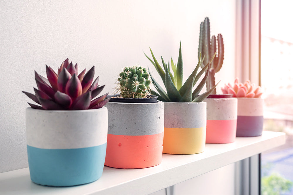 painted pots with succulents and cacti holiday gift