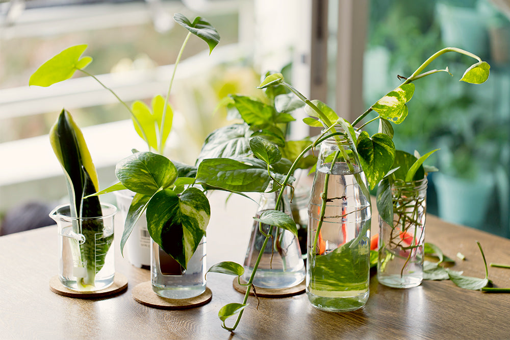 propagation station in beakers