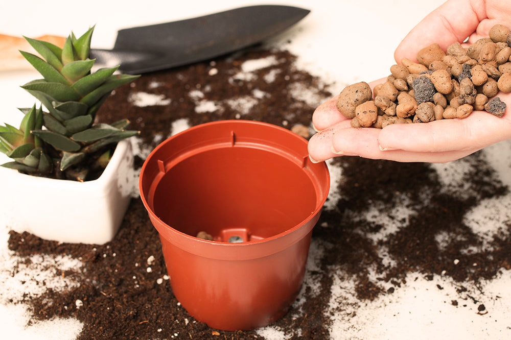 repotting houseplants for better drainage