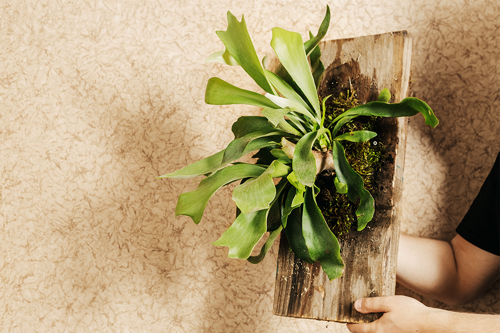 staghorn fern on plaque summer tropical