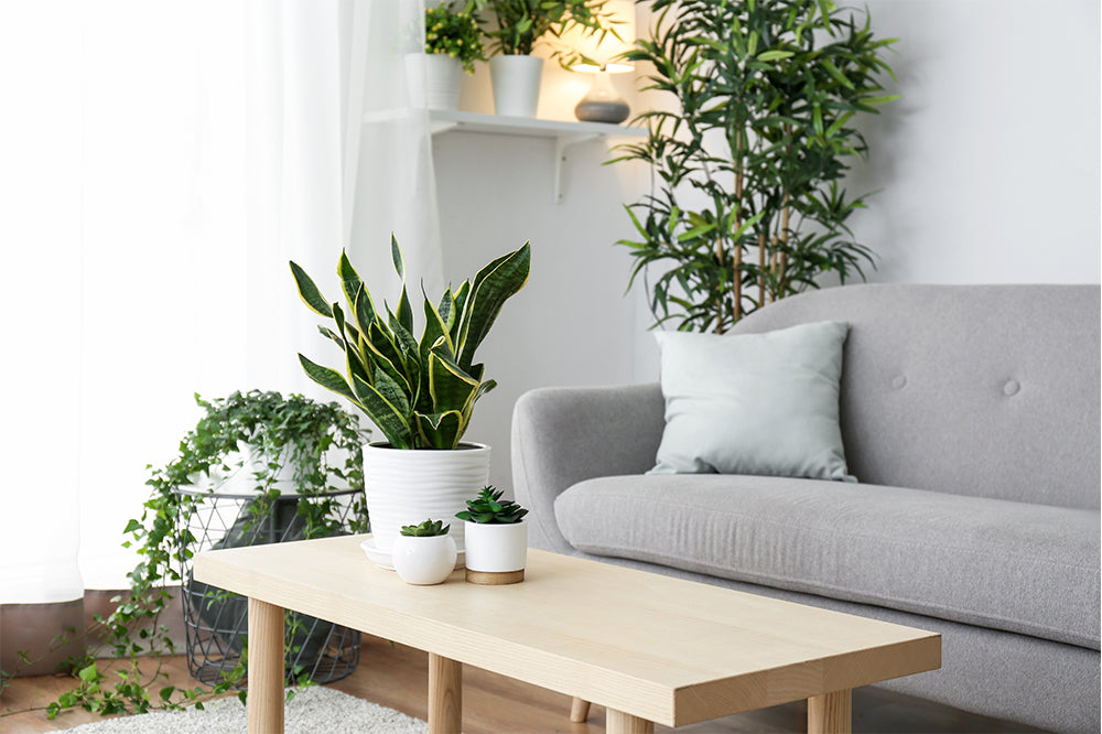 warm the bench with houseplants