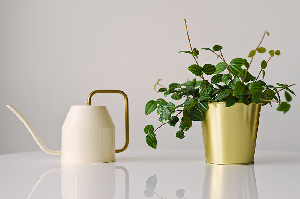 watering houseplants peperomia with watering can care