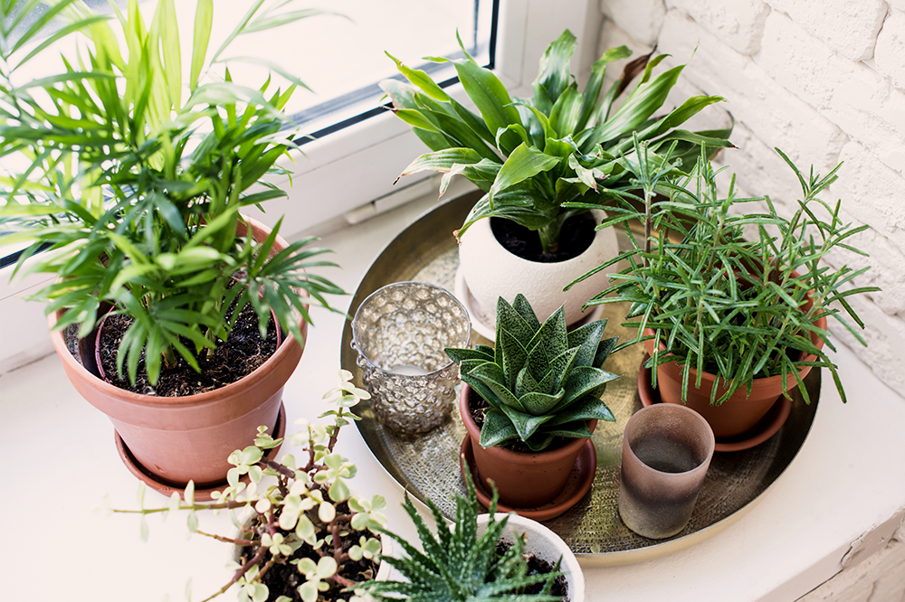 cluster your houseplants