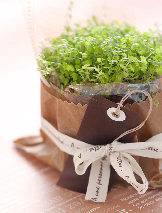 wrapped plant with card