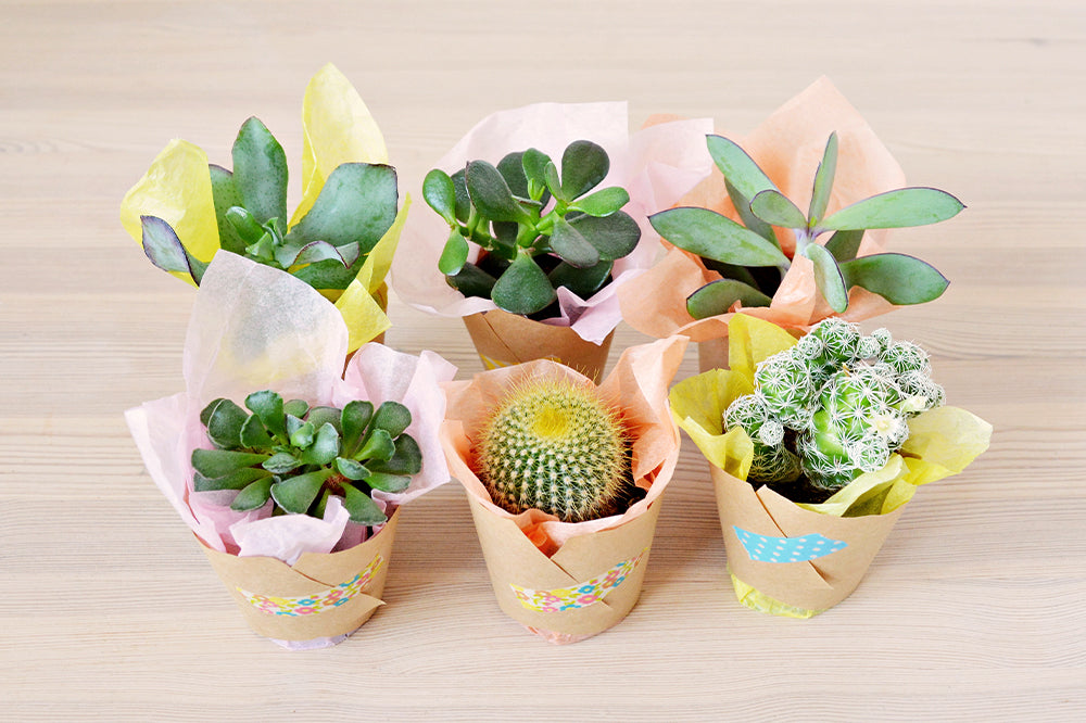 wrapped succulents