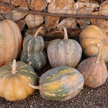Load image into Gallery viewer, Squash - Rancho Marques