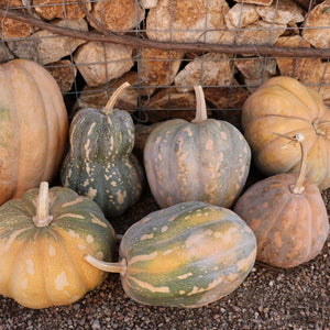 Squash - Rancho Marques