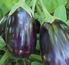 Load image into Gallery viewer, Black Beauty Eggplant Seeds